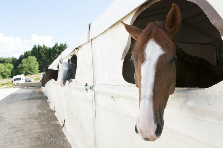 Bild 2: Mobile Pferdeboxen und Stallzelte