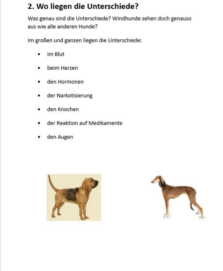Bild 2: Sind Windhunde auch richtige Hunde?