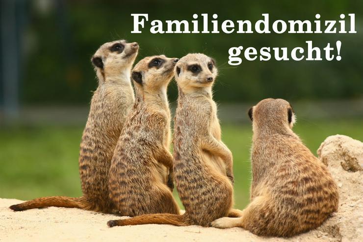 Familiendomizil gesucht! - Haus kaufen - Bild 1