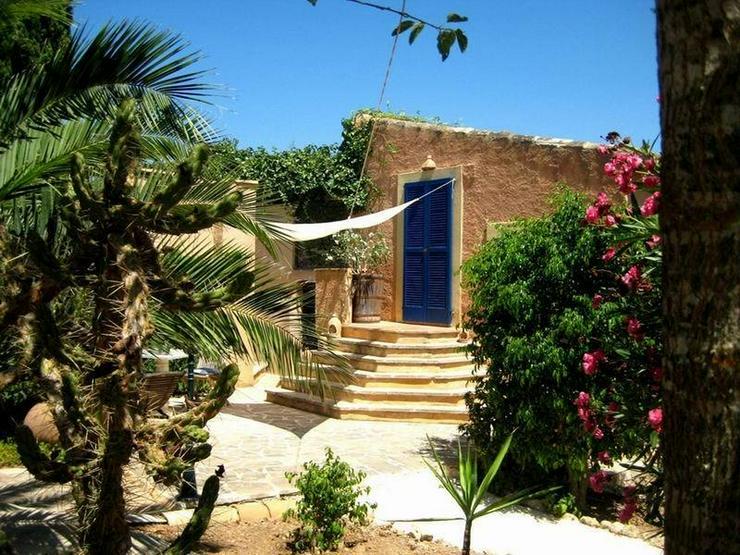 Mallorca-Son Macia, App. Junior der FincaOase - Ferienwohnung Spanien - Bild 1