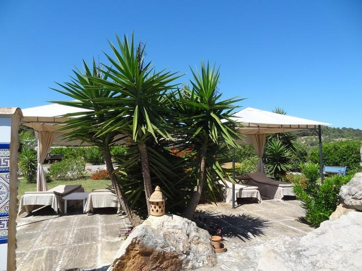 Bild 6: Mallorca-Son Macia, App. Junior der FincaOase