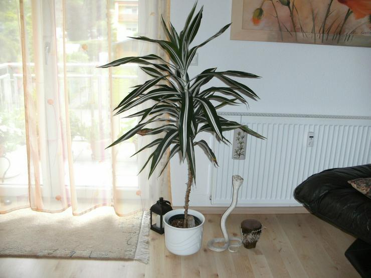 Zimmerpflanze - Pflanzen - Bild 1