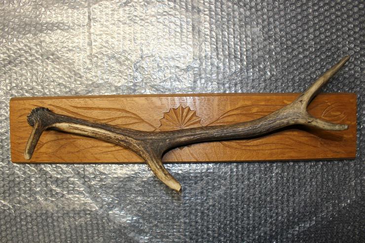 Geweih auf einem Holzbrett zu verkaufen