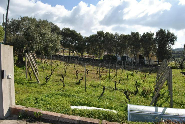 Bild 4: Landhaus mit Weinberg, Bosa, Sardinien, Italien