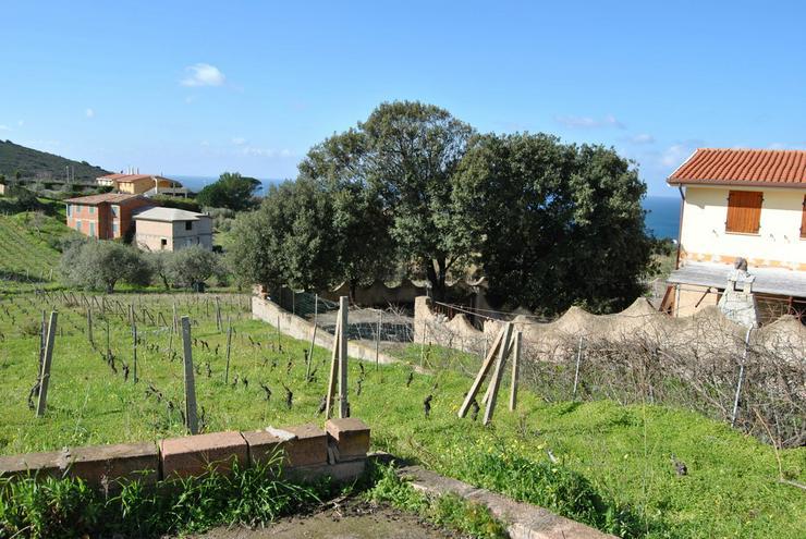 Bild 6: Landhaus mit Weinberg, Bosa, Sardinien, Italien