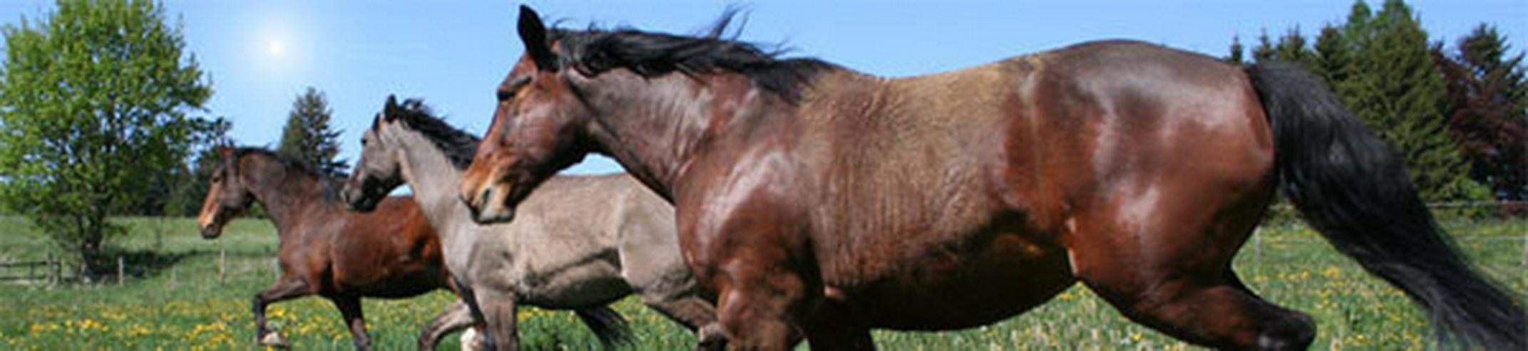 Geschenk Tipp für Pferdemenschen