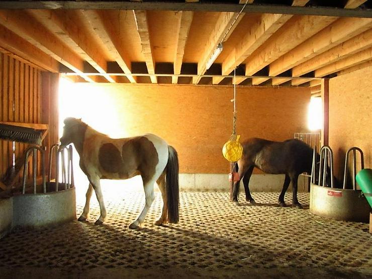 Bild 3: Wohnung über 2 Etagen mit Freisitz - Perfekt für Pferdeliebhaber