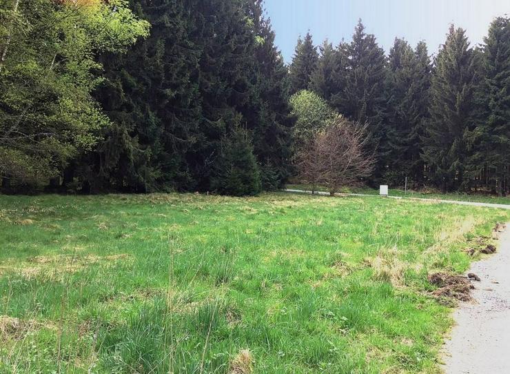 Natur pur - Grundstück kaufen - Bild 1