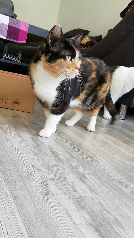 2 süße Katzen abzugeben (w und m kastriert) - Bild 1