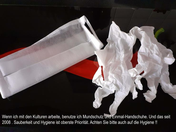 Bild 4: Milchkefir - frische Kultufen - 10 gramm