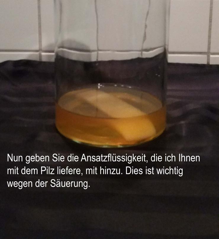 Bild 6: Kombucha - 100 gramm frischer Pilz