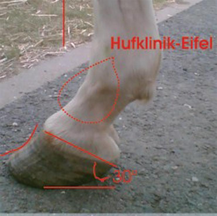 Hufanalyse und Beratung für Pferde