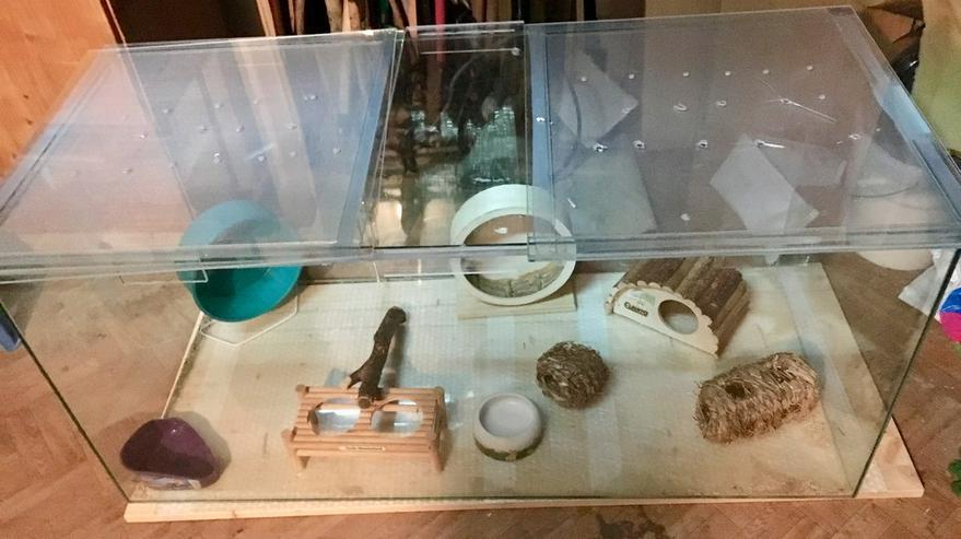Ich verkaufe ein Terrarium - Käfige, Ställe & Ausstattung - Bild 1