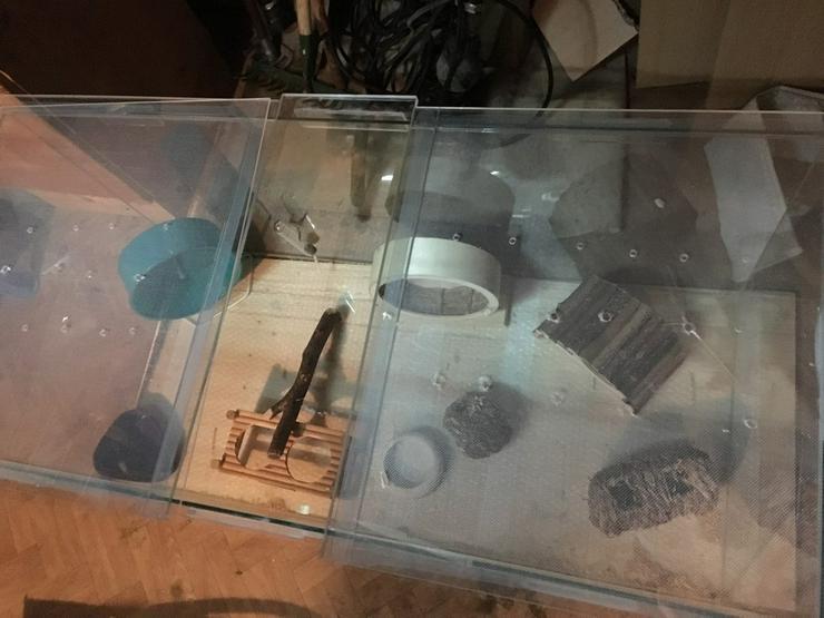 Bild 2: Ich verkaufe ein Terrarium