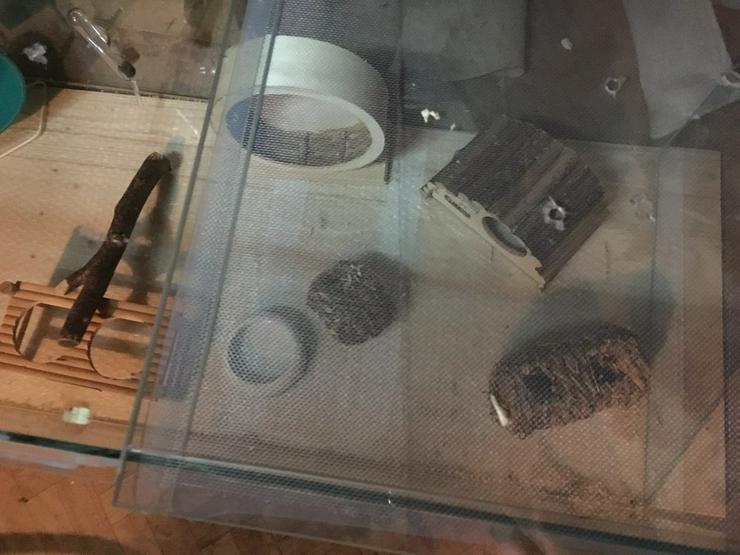 Bild 4: Ich verkaufe ein Terrarium