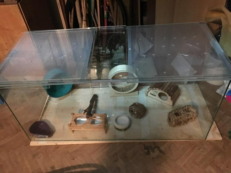 Bild 6: Ich verkaufe ein Terrarium