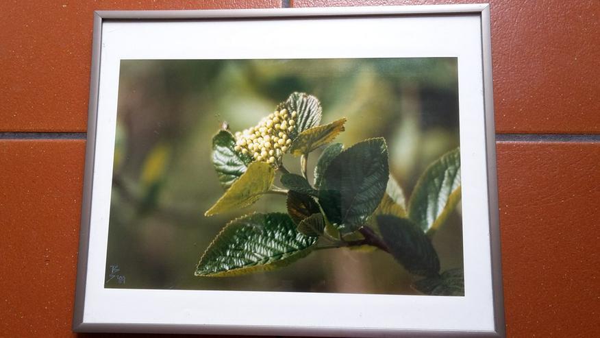 Künstlerische Fotografie ?Blütenzweig?
