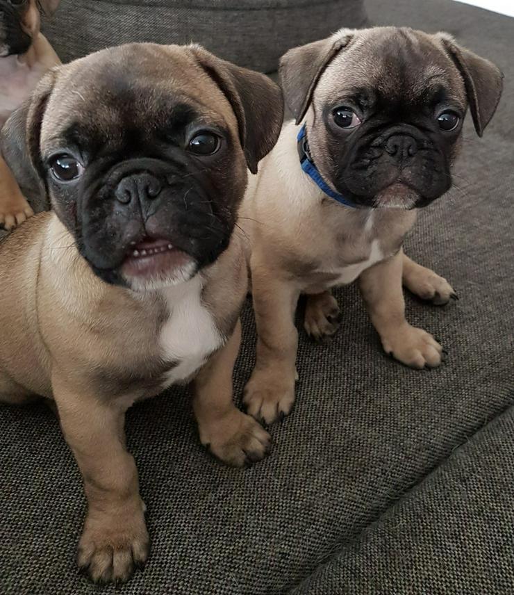 2 süsse rüden - Mischlingshunde - Bild 1