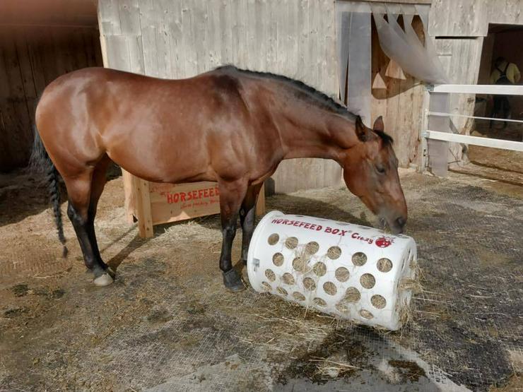 HORSEFEED BOX Crazy Bomb - Slow Feeder - Heutonne - Heurolle - Heuraufe - Heukiste