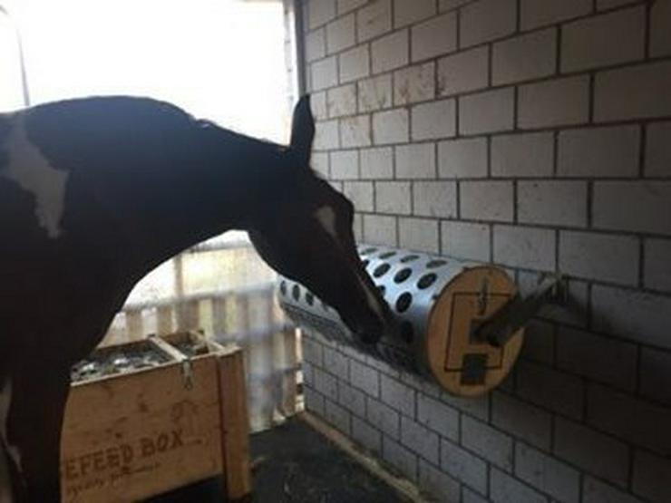 Bild 6: HORSEFEED BOX® The Rolling Dinner - Modell 40