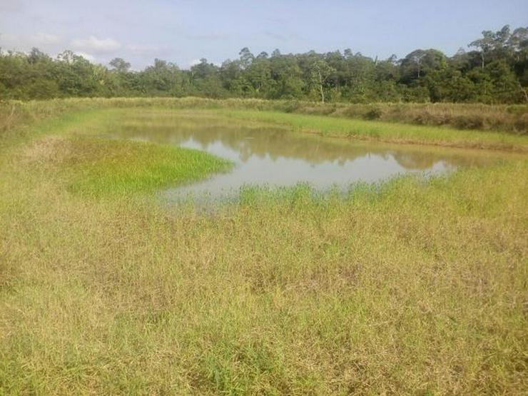 Brasilien 1000 Ha Grundstück bei Manaus-billig