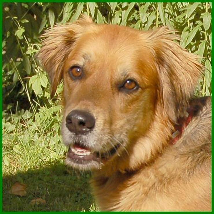 Friedi - Mischlingshunde - Bild 1
