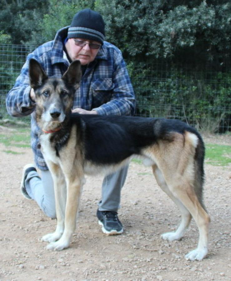 Der liebe Fritz sucht ganz schnell ein Zuhause - Mischlingshunde - Bild 1