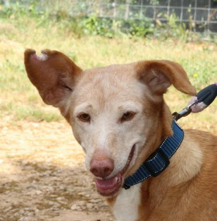Bild 2: Wer hat ein Herz für bezaubernde Hundeomi Marie