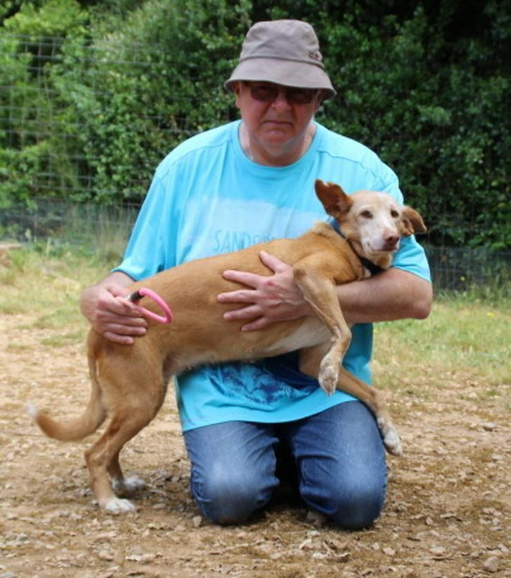 Wer hat ein Herz für bezaubernde Hundeomi Marie - Mischlingshunde - Bild 1