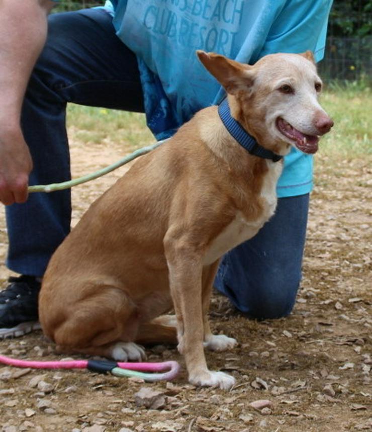 Bild 3: Wer hat ein Herz für bezaubernde Hundeomi Marie