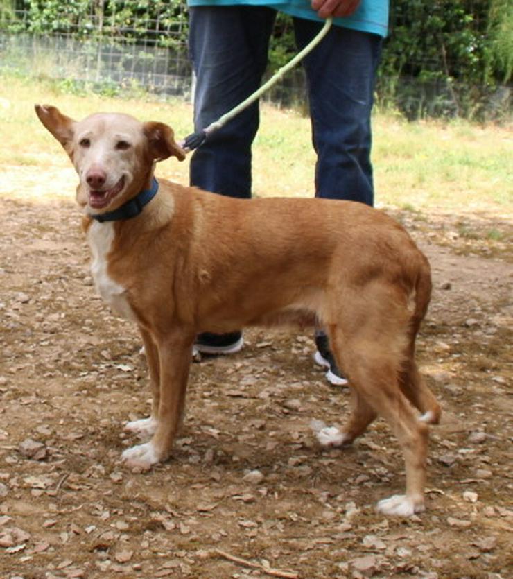 Bild 4: Wer hat ein Herz für bezaubernde Hundeomi Marie
