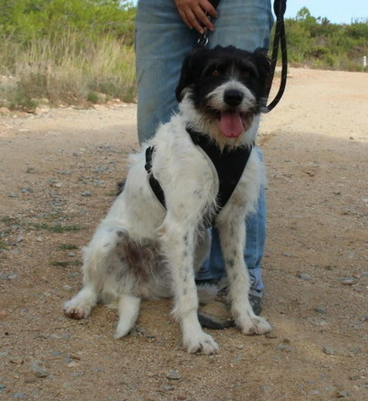 Agnes, prima Hundemädchen - Mischlingshunde - Bild 1