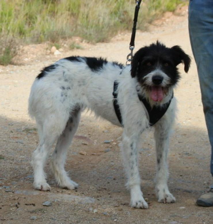 Bild 3: Agnes, prima Hundemädchen