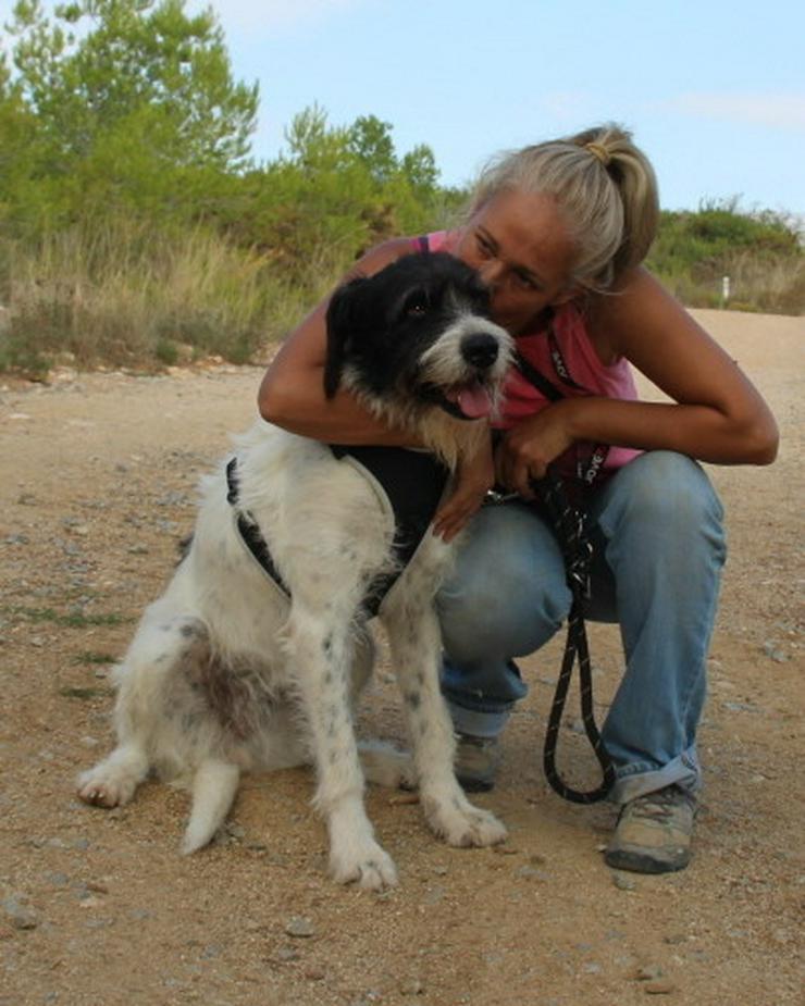 Bild 4: Agnes, prima Hundemädchen