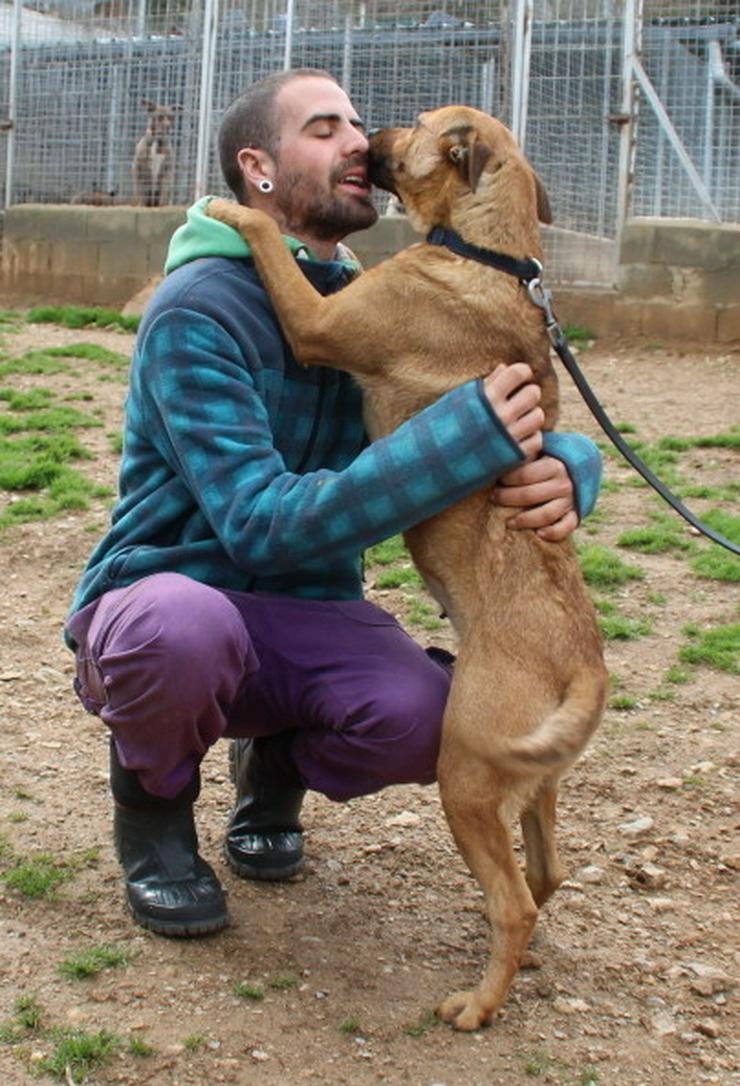 Onda,eine treue Seele - Mischlingshunde - Bild 1