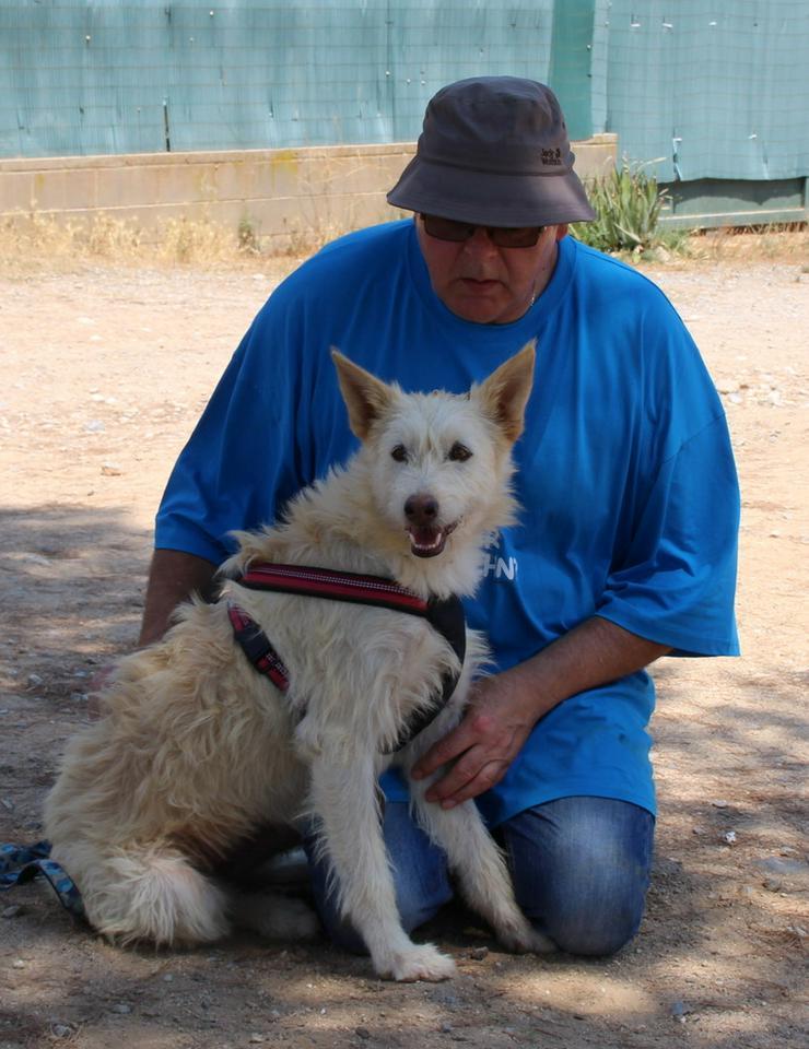 Selma, reizende Schönheit - Mischlingshunde - Bild 1