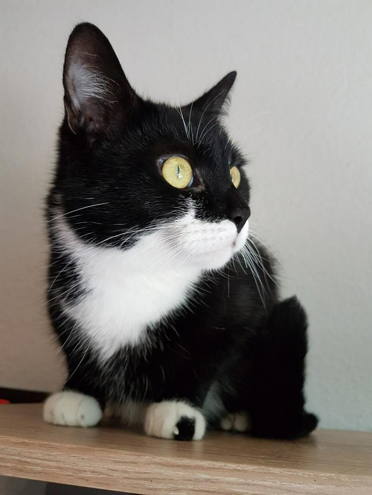 dringend neues zuhause gesucht! - Mischlingskatzen - Bild 1