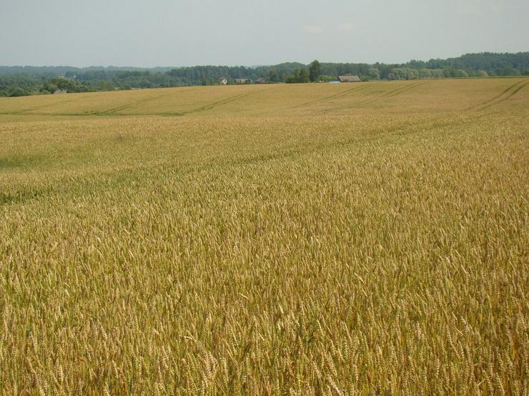 Getreidefarm in Lettland zu verkaufen