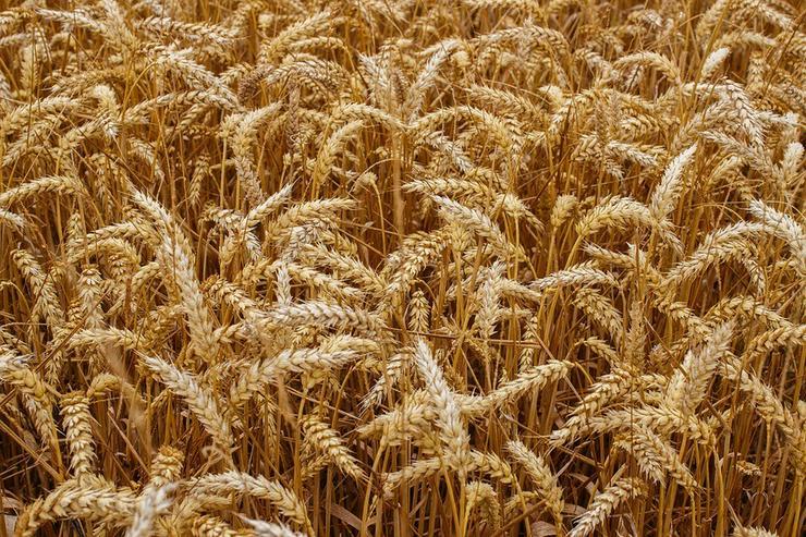 Investitionen in die Landwirtschaft in Lettland