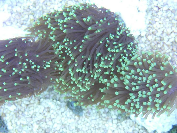 Bild 3: Diverse Korallen SPS und LPS