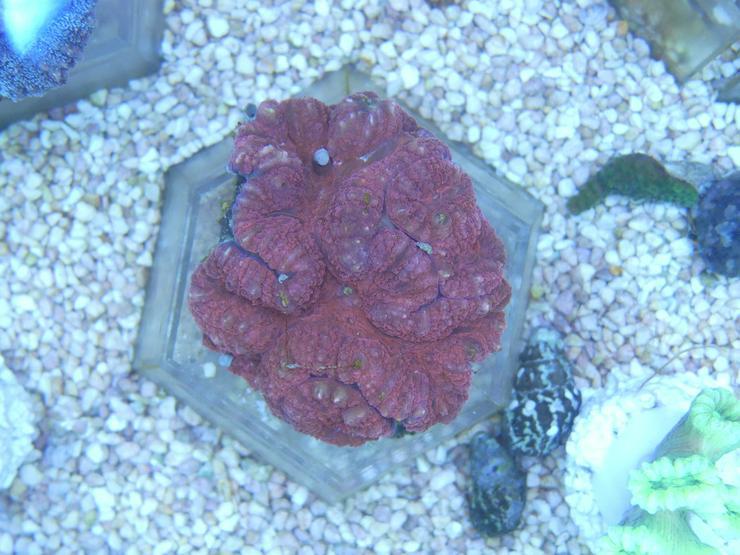 Bild 4: Diverse Korallen SPS und LPS