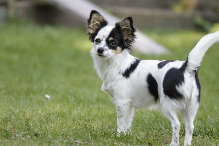 Urlaubsbetreuung für kleine Hunde