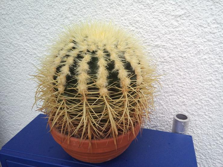Bild 2: Kaktus / Kugelkaktus