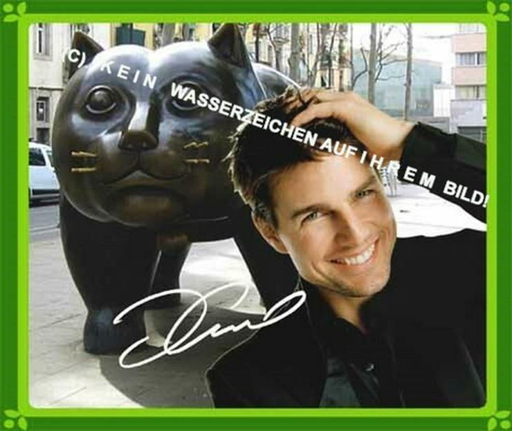 Bild 4: Spanisches Wandbild: Tom Cruise  und Katze