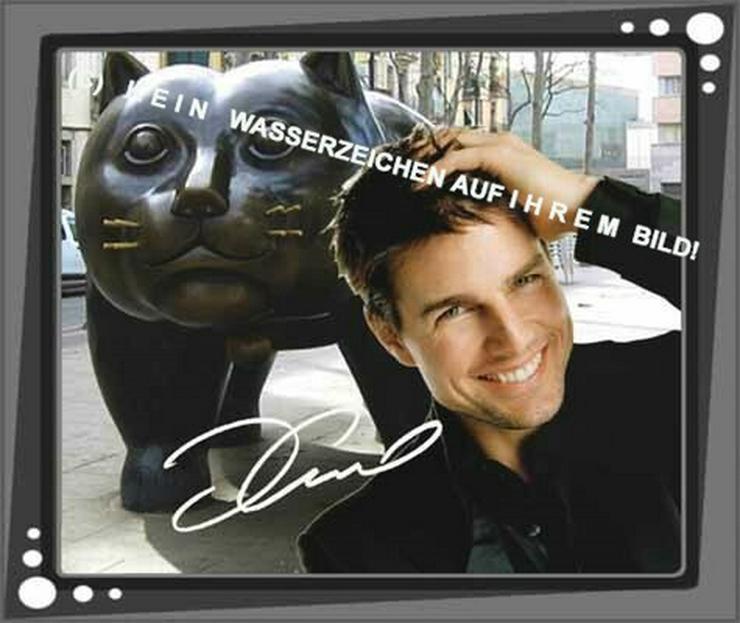 Spanisches Wandbild: Tom Cruise  und Katze