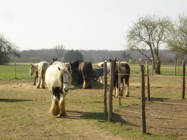 Bild 2: Reiterhof / Ranch im Ungarn /nähe Plattensee