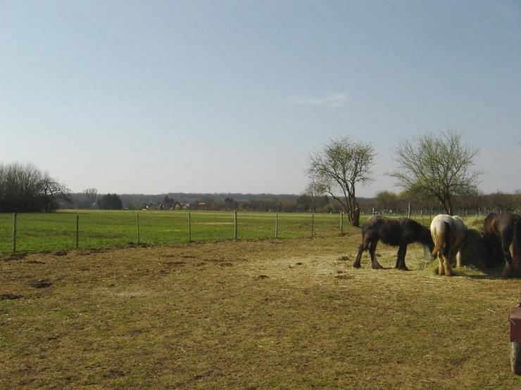 Bild 4: Reiterhof / Ranch im Ungarn /nähe Plattensee