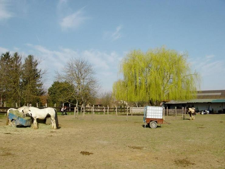 Bild 5: Reiterhof / Ranch im Ungarn /nähe Plattensee
