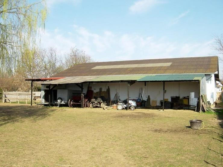 Bild 6: Reiterhof / Ranch im Ungarn /nähe Plattensee