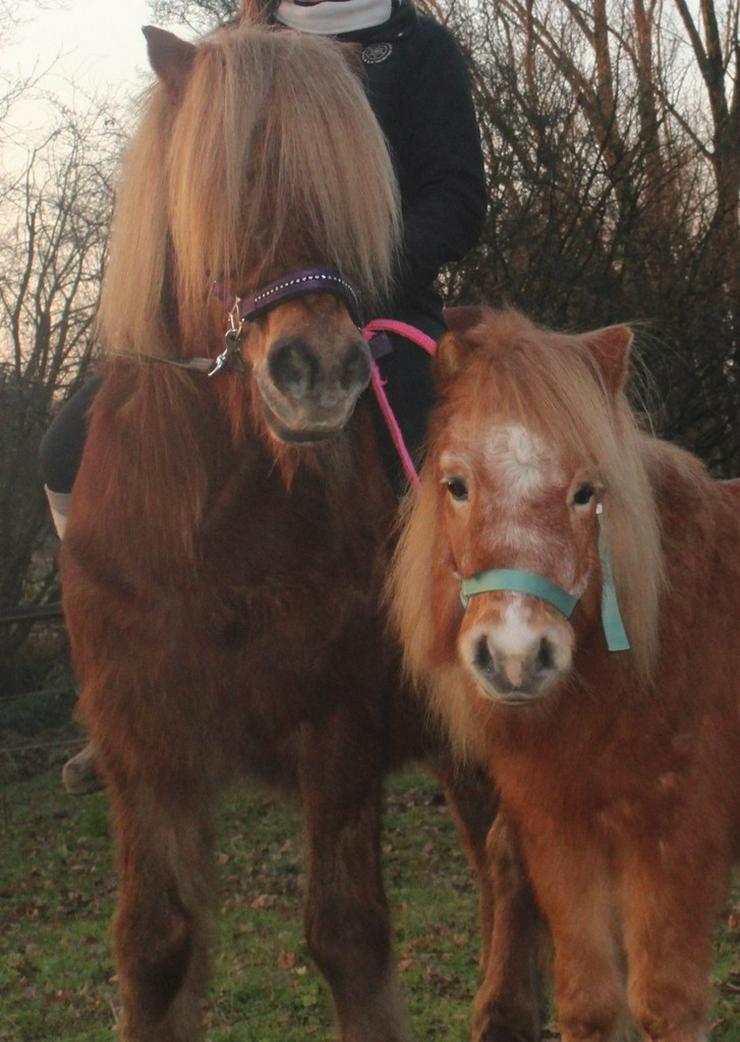 Pony Reiten für Kinder